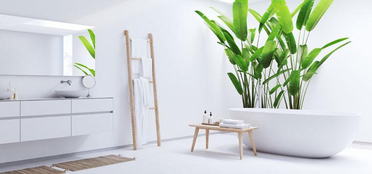 Plantes tropicales dans une salle de bain lumineuse